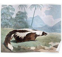 Mephitic Weasel Animal Vintage Art Poster