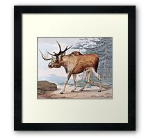 Bull Moose Vintage Drawing Framed Print