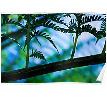 Green fern blur Poster