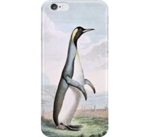 Penguin Bird Illustration iPhone Case/Skin