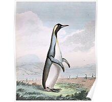 Penguin Bird Illustration Poster