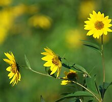 Sunny Days Ease by Lisa Bianchi
