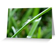 White Spider Greeting Card