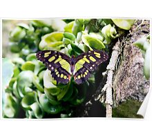 Butterfly Green Monster Poster