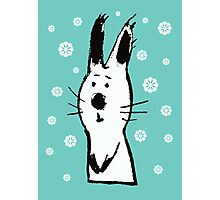 Snow Rabbit Photographic Print