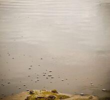 Croc by farcaphoto
