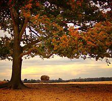 In the Shadow of a Tree - Aekingerzand by Jo Nijenhuis