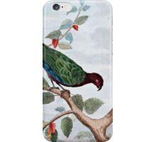 Pompadour Parrot Art iPhone Case/Skin