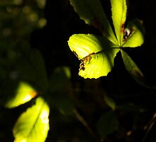 Leaf in shadow and light by gracetalking