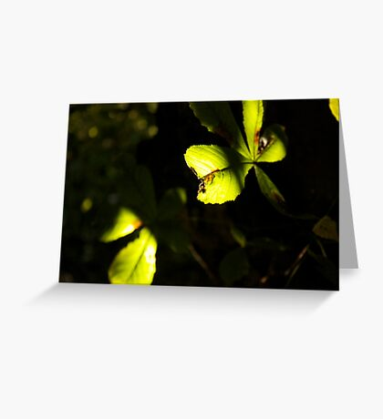 Leaf in shadow and light Greeting Card
