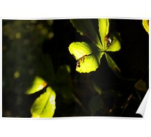 Leaf in shadow and light Poster