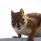 Intruder by camerahappy