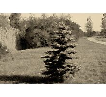 The Lonesome Blue Photographic Print