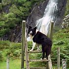 Indy at Aber Waterfalls by Michael Haslam