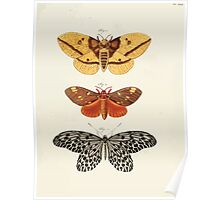 Exotic butterflies of the three parts of the world Pieter Cramer and Caspar Stoll 1782 Supplement 0275 Poster