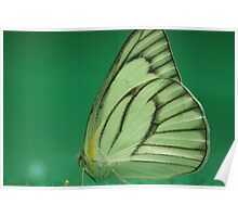 paper-kite-butterfly Poster