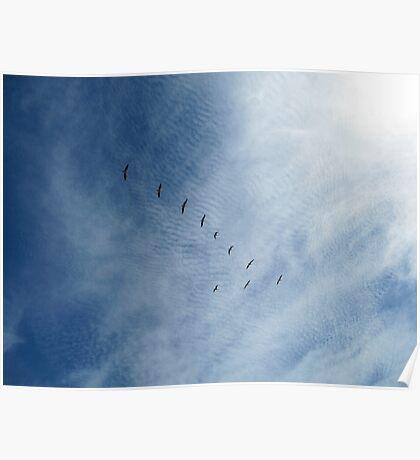 Distant Birds  Poster