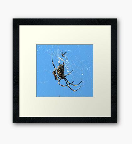 Balfour Spider Framed Print
