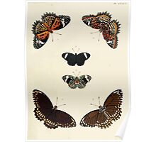 Exotic butterflies of the three parts of the world Pieter Cramer and Caspar Stoll 1782 V4 0033 Poster
