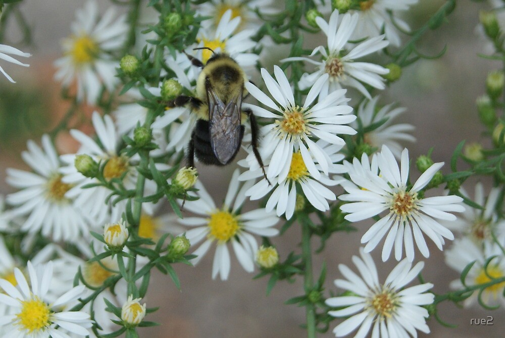 pollinating by rue2