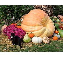 Harvest Display - Longwood Gardens Photographic Print