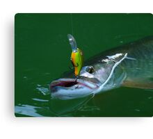 Muskie Madness Canvas Print