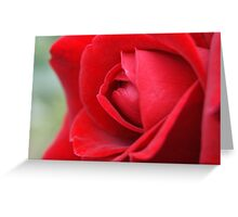 rose o' beautiful rose Greeting Card