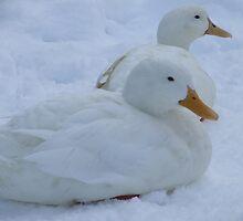 Duck Down - Stamford Park, Stalybridge by dawnandchris