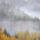 Autumn fog by Kasia Nowak