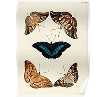 Exotic butterflies of the three parts of the world Pieter Cramer and Caspar Stoll 1782 V2 0228 Poster