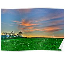 Clouds over a Dandelion Field Poster