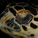 Hawksbill Portrait III by Todd Krebs