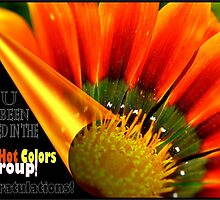 Fiery Hot Colors New Featured Banner by Cleber Photography Design