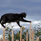 Cat Walk by © Loree McComb