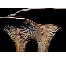 Two Mushrooms Photographic Print
