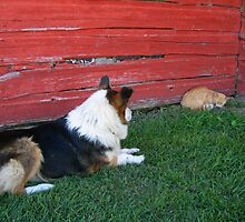 cat and dog standoff by Matte Downey
