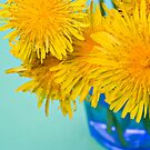 Cheerful Dandelions in Blue Vase by jeliza