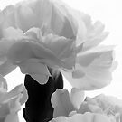 Art Deco-inspired Carnation macro by jeliza