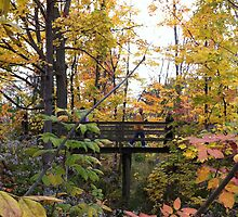 yellow woods and bridge in fall by Matte Downey