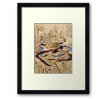 Big crab Framed Print