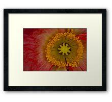Nature's Spinning Wheel Framed Print