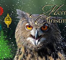 Owl Merry Christmas Card by TJ Baccari Photography