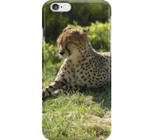 Dozing in Sunlight iPhone Case/Skin