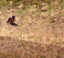 Wild Horse by Bobtographer