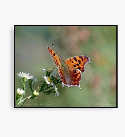 Question Mark butterfly... Canvas Print