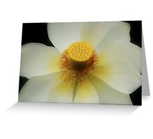 White Lotus. Greeting Card