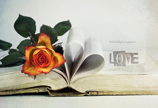 Book of Love by Andreas Stridsberg