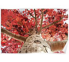 up the autumn tree Poster