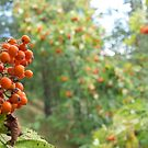Orange autumn by Janne Keinänen