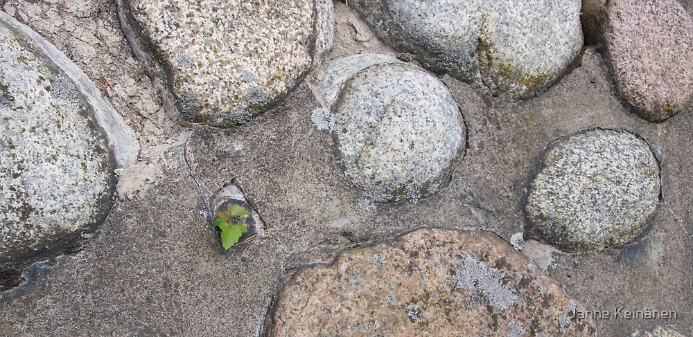 A bit of life amongst stones by Janne Keinänen